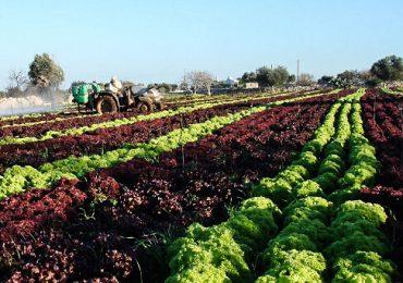 Cooperativa agricolă, cea mai avantajoasă formă de fiscalizare?
