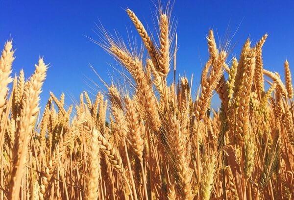 Exporturile de cereale ale Ucrainei, în creştere