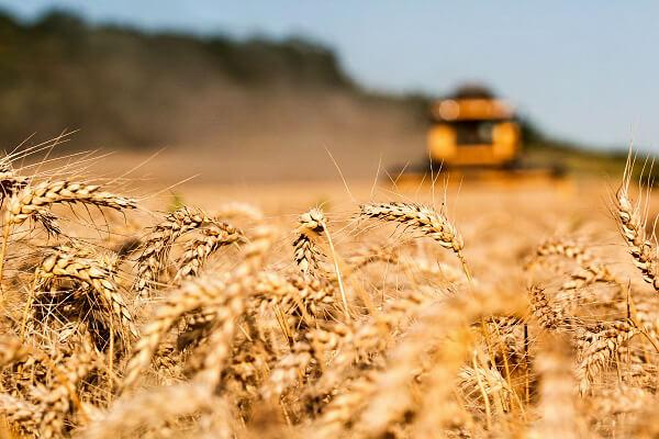 """""""În agricultură trebuie să producem mai mult pe aceeaşi suprafaţă"""""""