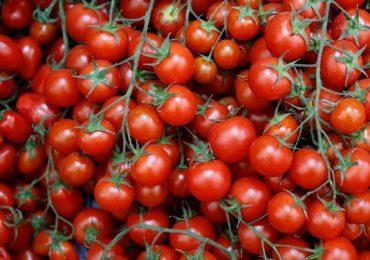 Sprijin de la guvern pentru fermierii care cultivă tomate şi usturoi