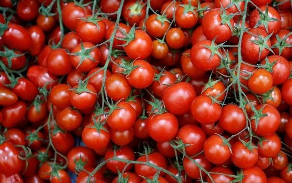 """Modificări aduse programului """"Tomata"""""""