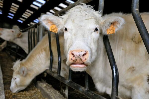 Controale la fermele de animale