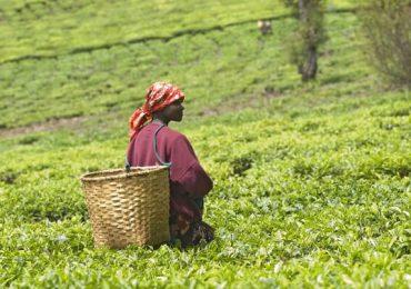 """Expert ONU: """"Până la 80% din populaţia ţărilor aflate în pragul foametei depinde de agricultură"""""""