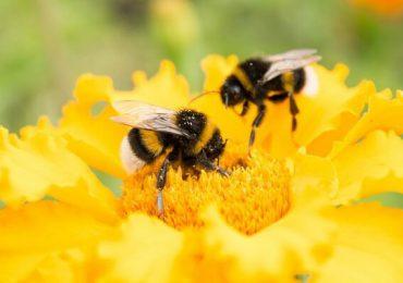Campanie la nivel european pentru interzicerea pesticidelor şi salvarea albinelor