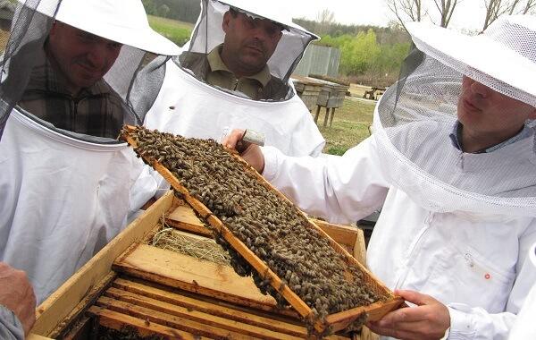 Sprijin financiar pentru apicultorii afectaţi de fenomene meteo nefavorabile