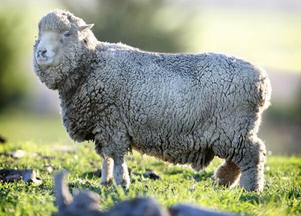 Noutăţi de la APIA pentru crescătorii de animale