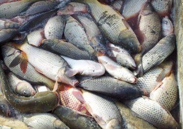 Bursa de peşte electronică, disponibilă începând de astăzi