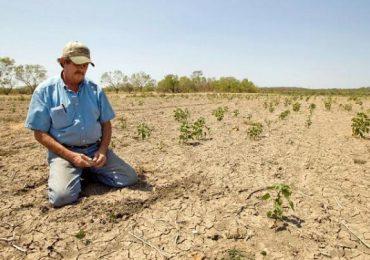 """Adrian Oros: """"Toţi fermierii afectaţi de secetă vor fi despăgubiţi"""". Sprijin financiar promis şi pentru apicultori"""