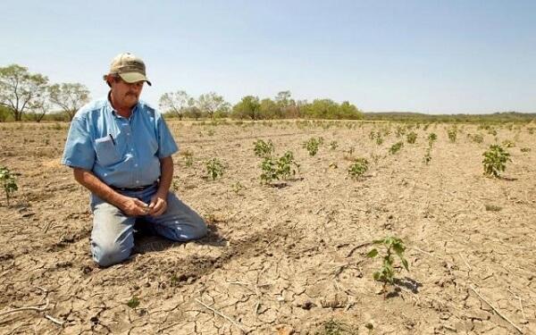 Seceta s-a instalat în sudul şi estul ţării. Ce culturi sunt afectate şi când pornesc irigaţiile