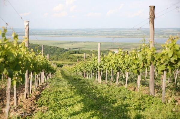 Domeniul viticol Drăgaşi, scos la licitaţie