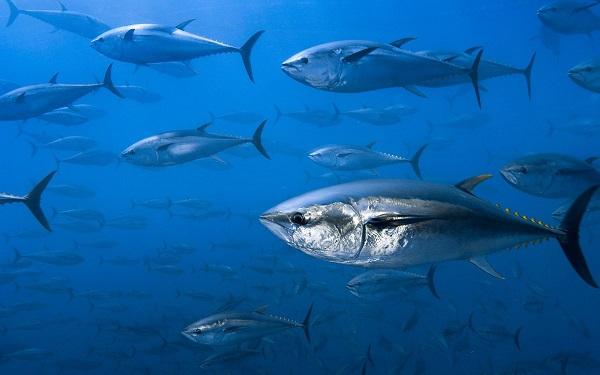 2 mai - Ziua mondială a tonului