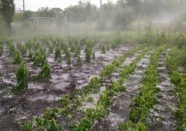Cereri de plată depuse de fermieri pentru asigurarea culturilor