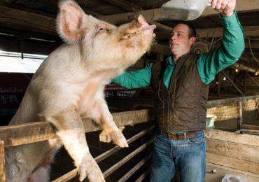 """Asigurări de """"sus"""": """"Porcul din gospodărie nu va dispărea!"""""""