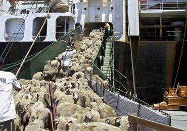 """Euronews: """"România deranjează UE prin refuzul de a anula exportul celor 70.000 de oi în statele arabe"""""""