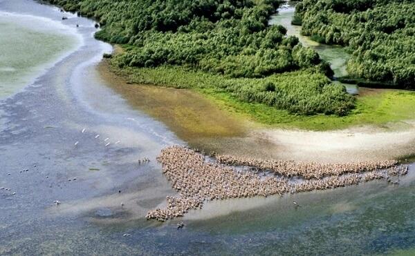 Peste 5.300 de hectare din Delta Dunării, introduse în circuitul agricol