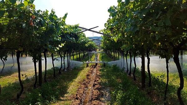 Agricultură mai productivă cu sisteme performante de irigaţii
