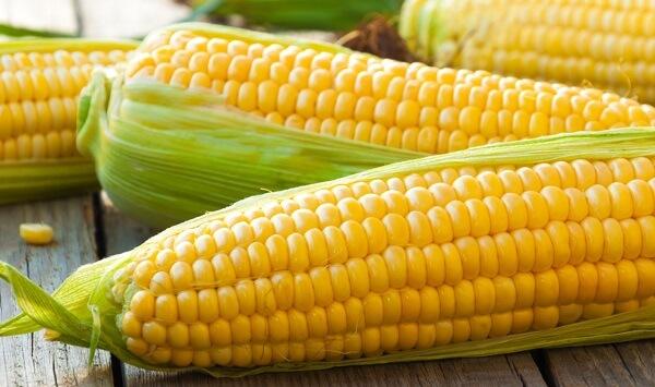 Fermierii propun guvernului stabilirea unor contingente pentru porumb
