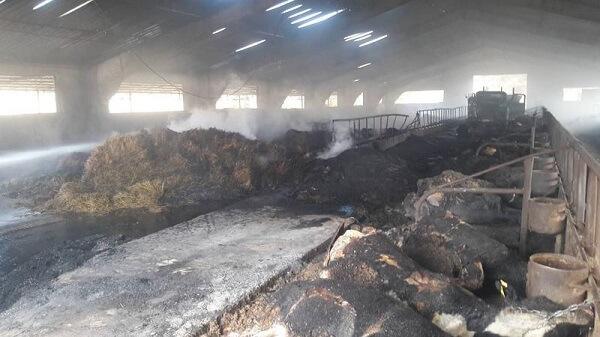 VIDEO: Incendiu la o fermă de vaci