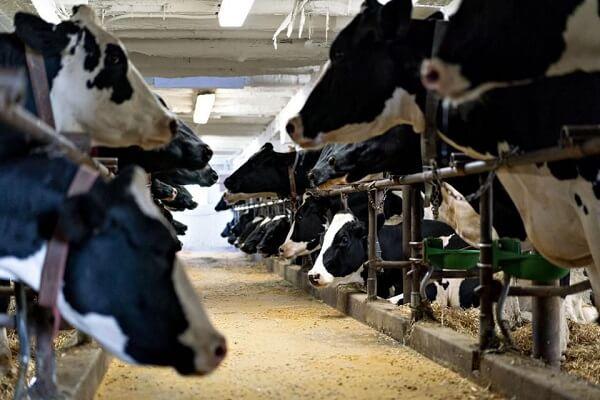APIA efectuează plata ajutorului de stat în sectorul creşterii animalelor