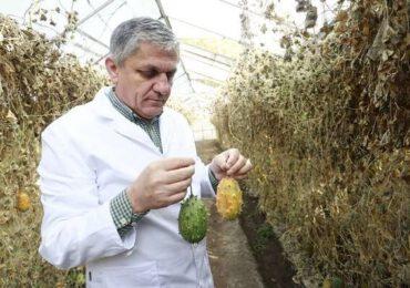 Costel Vînătoru va fi repus în funcţia de director al Băncii de Resurse Genetice Vegetale Buzău