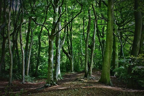 Sprijin pentru prima împădurire şi crearea de suprafeţe împădurite