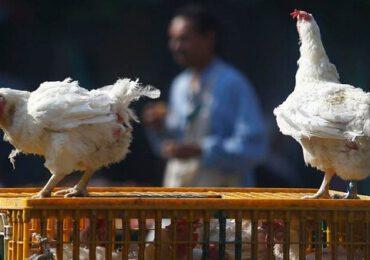 Focar de gripă aviară şi în Cehia, primul din ultimii trei ani