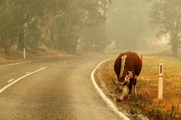 Impactul economic al incendiilor din Australia va depăşi 4,4 miliarde de dolari