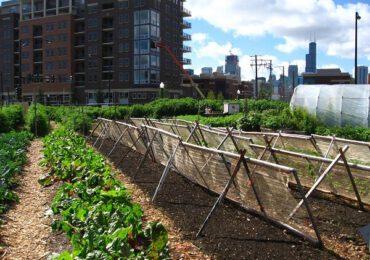 Creşte numărul fermierilor urbani
