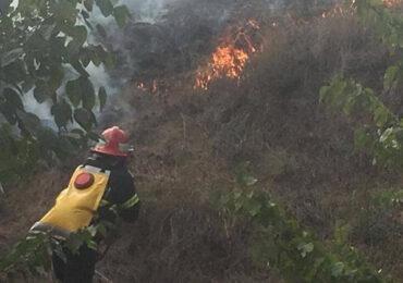 Peste 11.500 de hectare de vegetaţie din Delta Dunării, afectate de incendii de la începutul anului