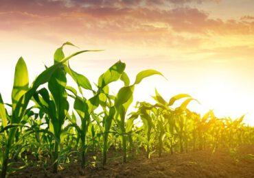Două dintre regiunile cele mai specializate în agricultură din Uniunea Europeană sunt din România