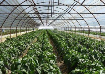 Subvenţie majorată pentru fermieri!