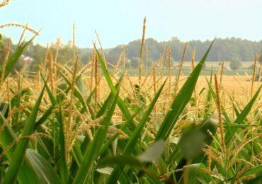 Uniunea Europeană vrea să reducă la jumătate utilizarea pesticidelor şi să extindă agricultura ecologică